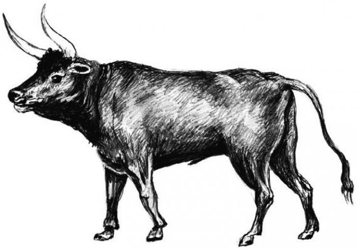 ce qu'il faut savoir sur la datation d'un homme taureau vient de commencer à sortir avec ce qu'il faut pour Noël