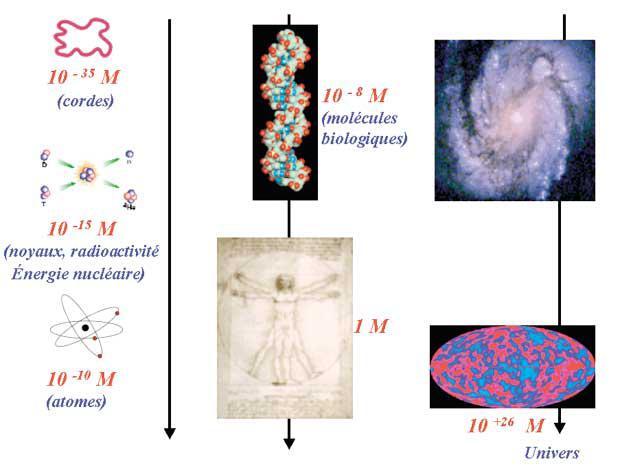 biologie quantique livre