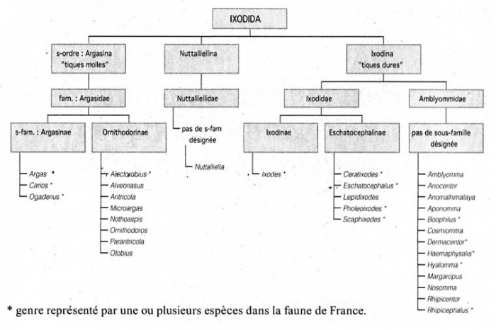 Les documents confidentiels sur le parasite