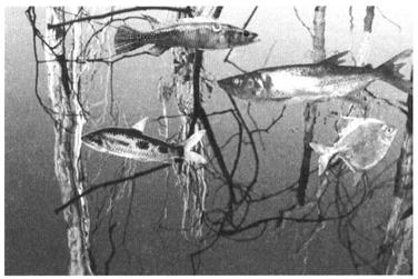 en ligne datant beaucoup plus de poissons