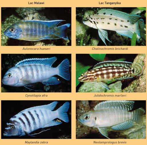 poissons hors de l'eau datant site Web