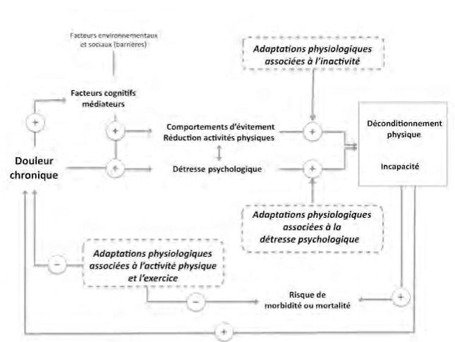 La Douleur En Mouvement Bases Physiologiques De L Activite Physique Presses De L Universite De Montreal