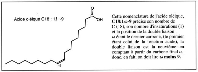 enzyme qui décompose les mots croisés gras