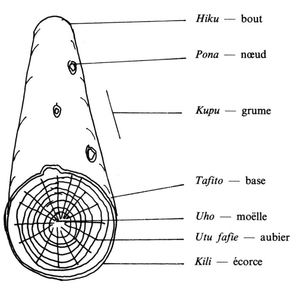 Technologie traditionnelle à Wallis - Chapitre VIII. La connaissance ...